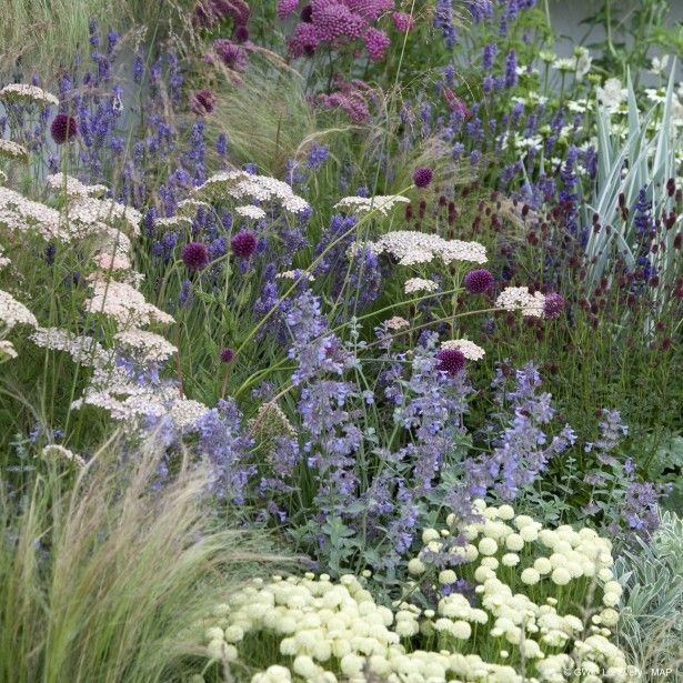 Photo of Plant list at link Low water drought tolerant perennial border featuring yarrow,… ,  #borde…
