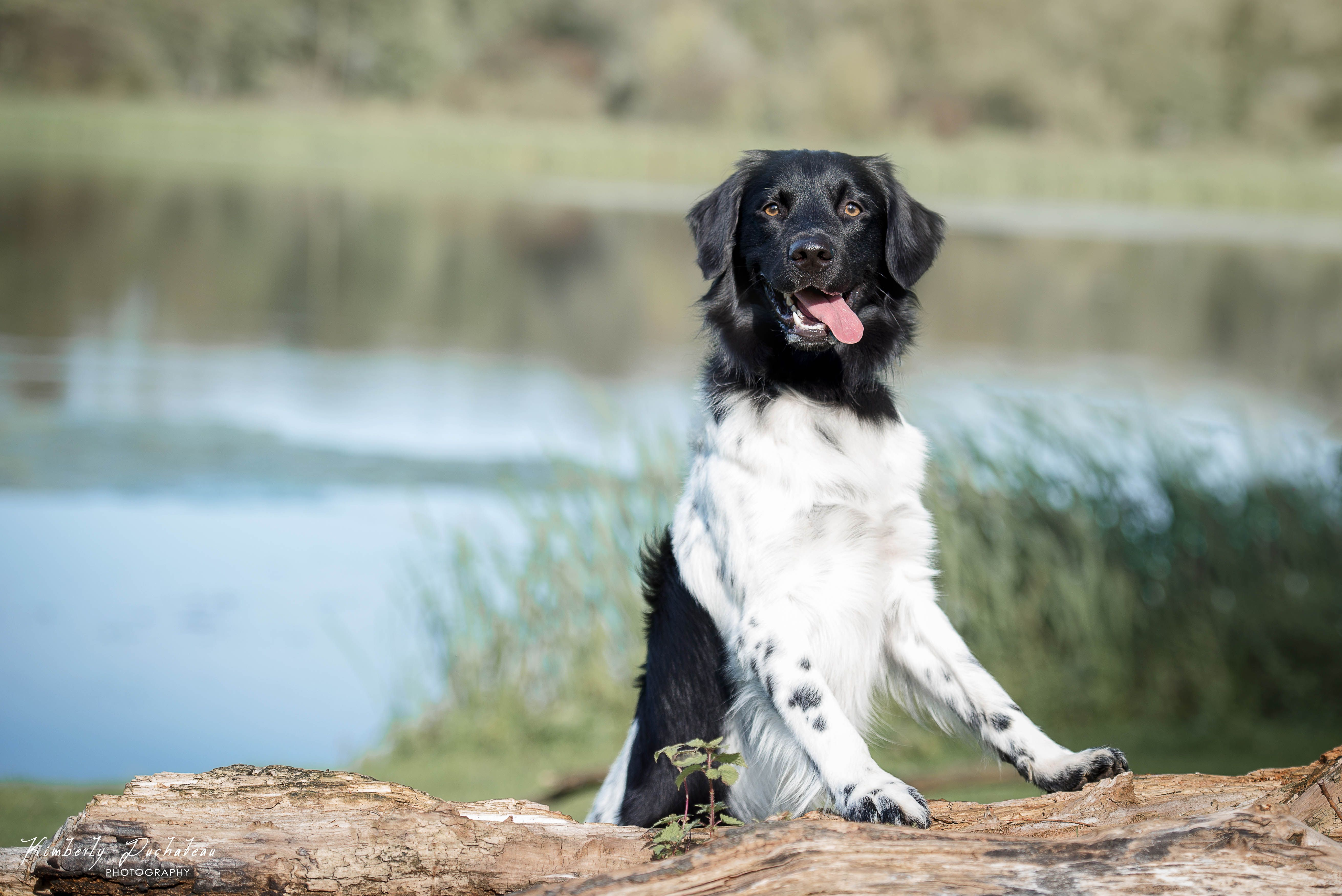 honden , dog , dogs , photography , puppy's , Nikon , fotografie , 70-200 MM lens , Kimberly Duchateau Photography , hondjes , hondenfotografie , Dog-photography , Dog pictures , Dog fotoidee's , Dog photography ideas , Dog photography owner , Professional dog photography , honden fotograaf , hondenfotografie houdingen , Dog photography poses , creative , green , pink , flowerbackground , studio , studio photography dogs