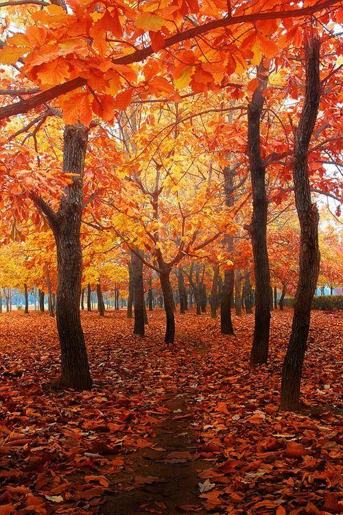 Turn of the season. gold, amber, peach, apricot, Halloween