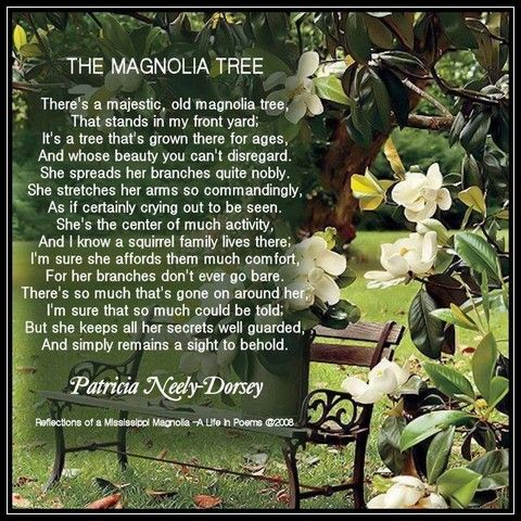 Poem The Magnolia Tree Southern Poems Magnolia Poems By Patricia
