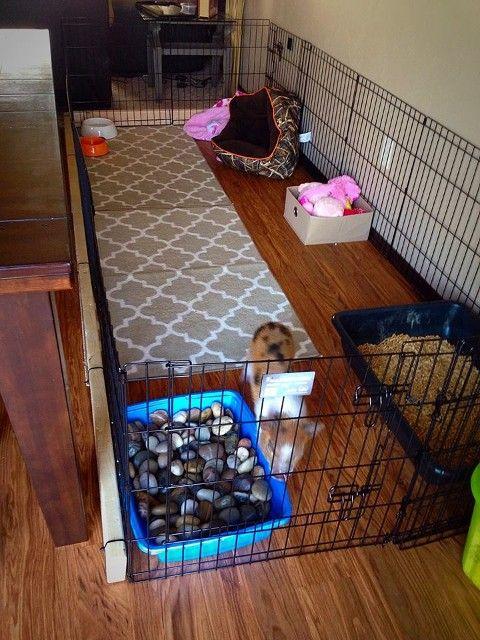 Metal Panel Pig Enclosure- No damage floor anchor | Chanel ...