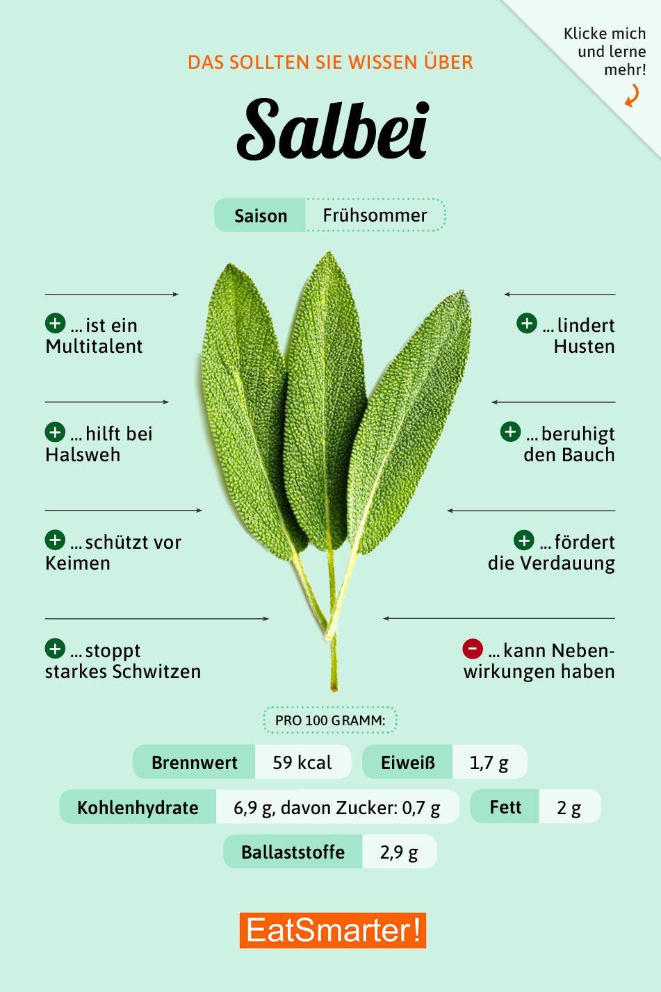 Das solltest du über Salbei wissen | eatsmarter.de #ernährung #infografik #salbei #laternebastelnkinder