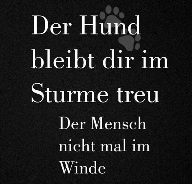 Pin von Sabine Meierhausen auf Merlin (mit Bildern ...