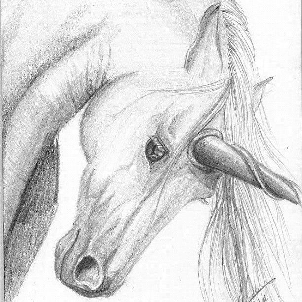 Unicorn drawing in pencil google search