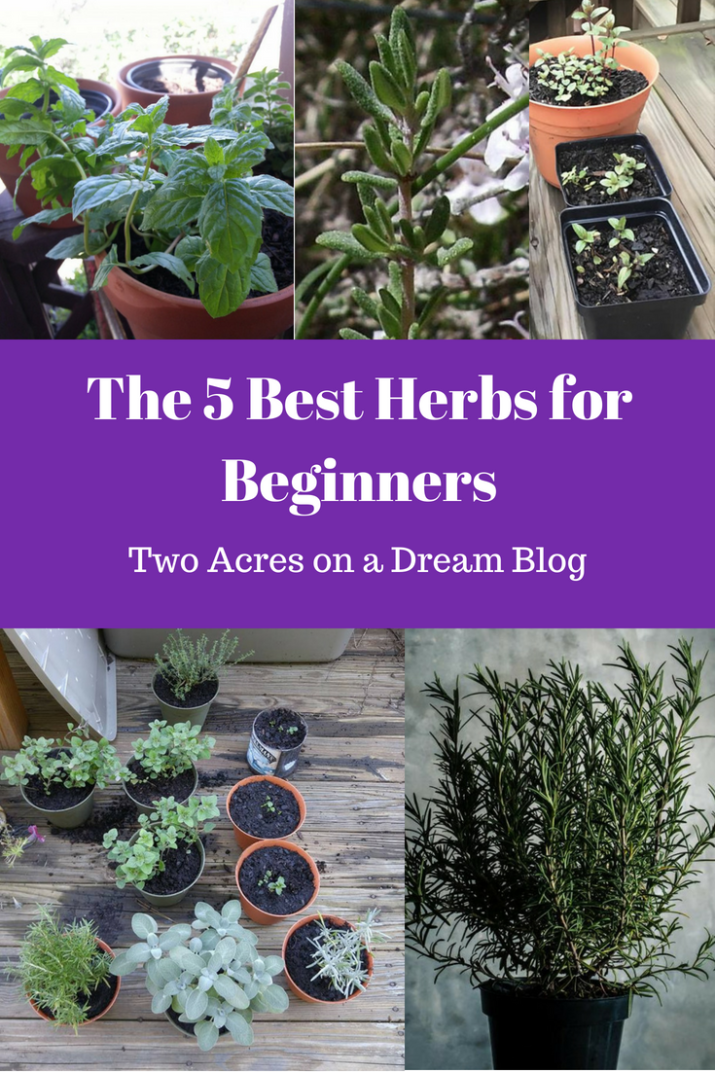 Delicieux Five Best Herbs For Beginners   Beginner Herbs Herb Gardening, Herbs Garden,  Home Vegetable