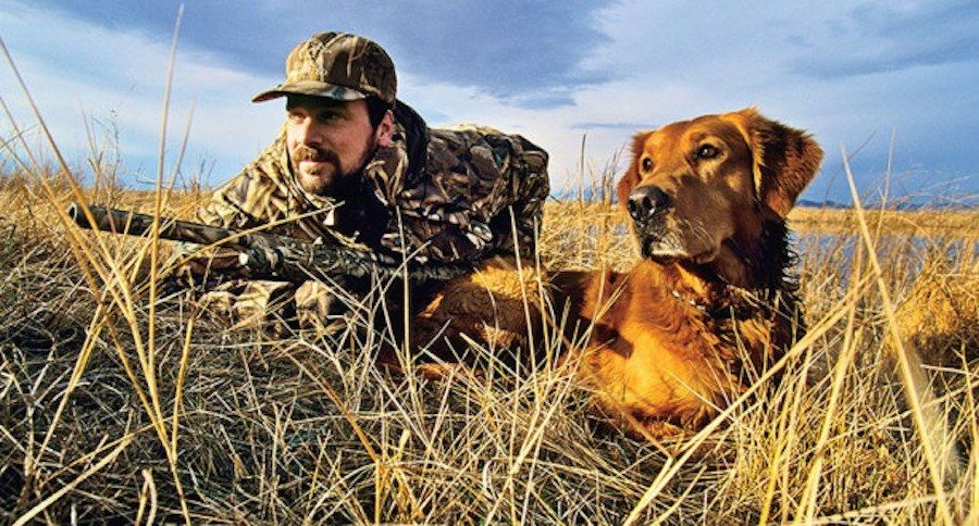 Training Techniques To Train Your Dog To Hunt Dog Training Dogs