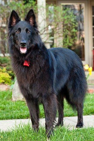 Smartest Dog Breeds Smartest Dog Breeds Akc Dog Breeds Dog Breeds