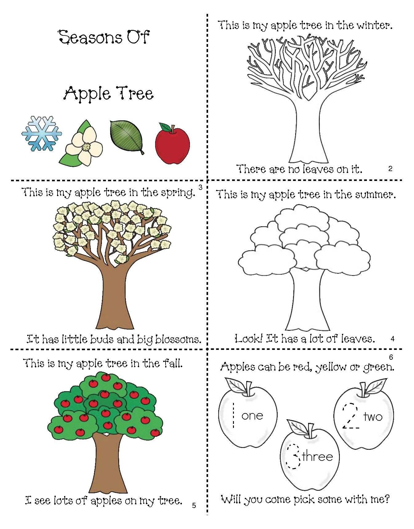 The 4 Seasons Of My Apple Tree