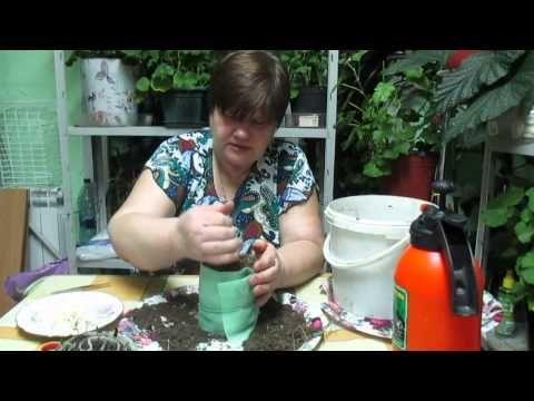 Выращивание лука-порея через рассаду: посадка и уход в 76