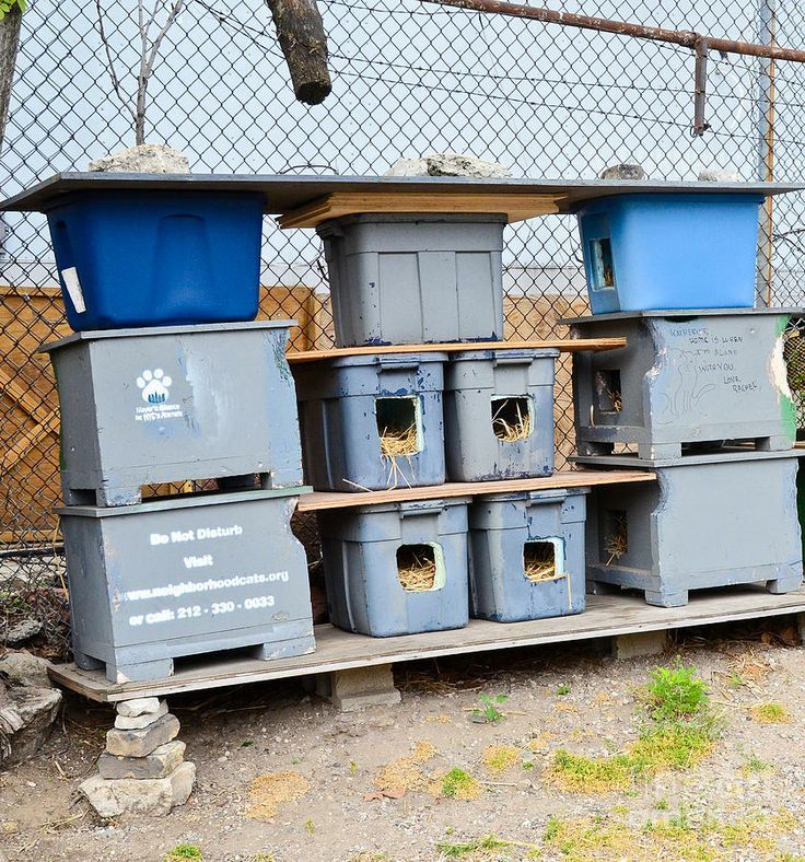 Pet DIY Shelter House Cat (With images) Feral cats