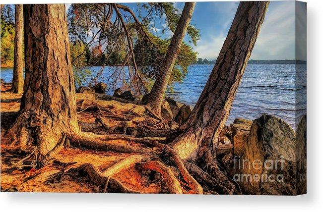 Golden Hour Trees At Lake Norman Canvas Print Canvas Art By Amy Dundon Fine Art America Canvas Prints Acrylic Prints