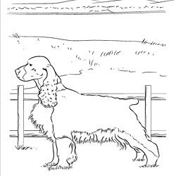childrens coloring pages springer spaniel | English Springer Spaniel Coloring Page | dog patterns ...