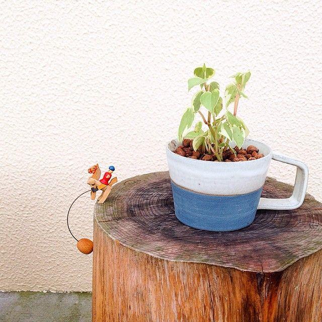 家に土を持ち込みたくない人の味方 ハイドロカルチャーで緑を育てよう
