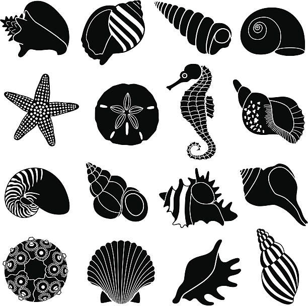 Image result for 3' seashell vectors