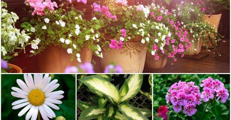 Plantas fáciles de cuidar para el jardín interior y exterior