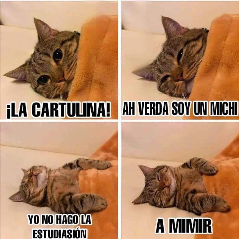 18 4 Mil Me Gusta 121 Comentarios Gato Poético Gato Poe En Instagram Sígue También Torrancek Pet Kitten Kitten Meowing Animals