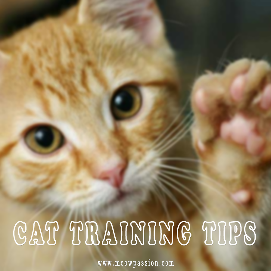 How To Train A Cat Tips And Rewards Meowpassion In 2020 Cat Training Training A Kitten Cats