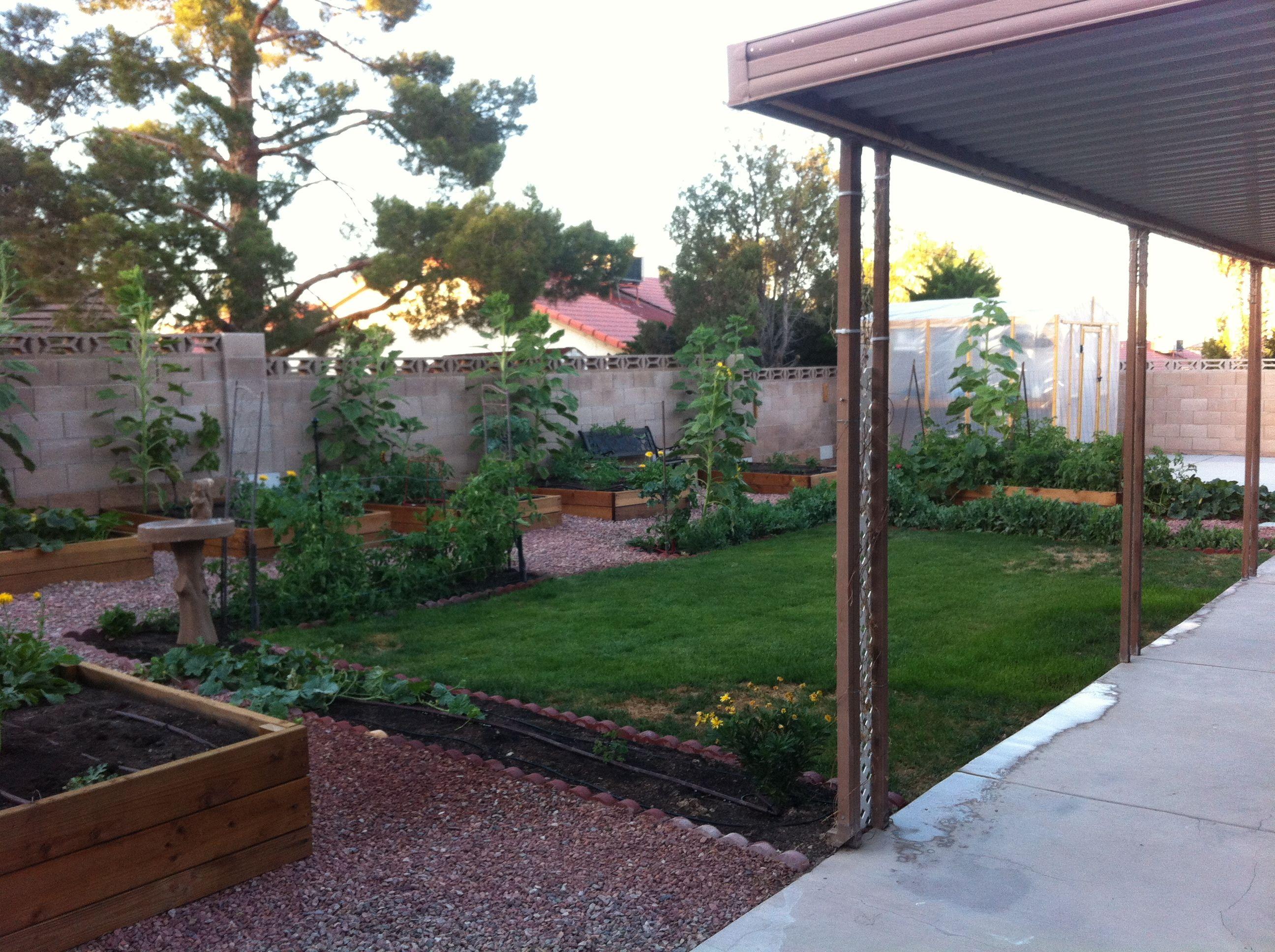 My Las Vegas Organic Garden. Hereu0027s Another View For Yau0027ll.