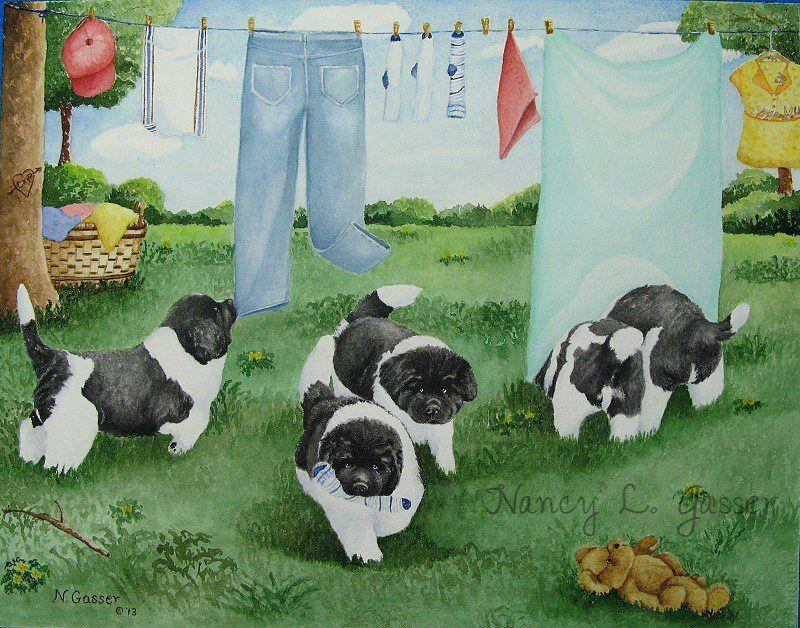 Laundry Trouble by Nancy Gasser Newfoundland dog, Pets