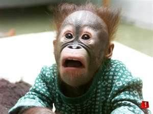 Animals Making Omg Faces Funny Animal Faces Monkeys Funny Funny Animal Pictures