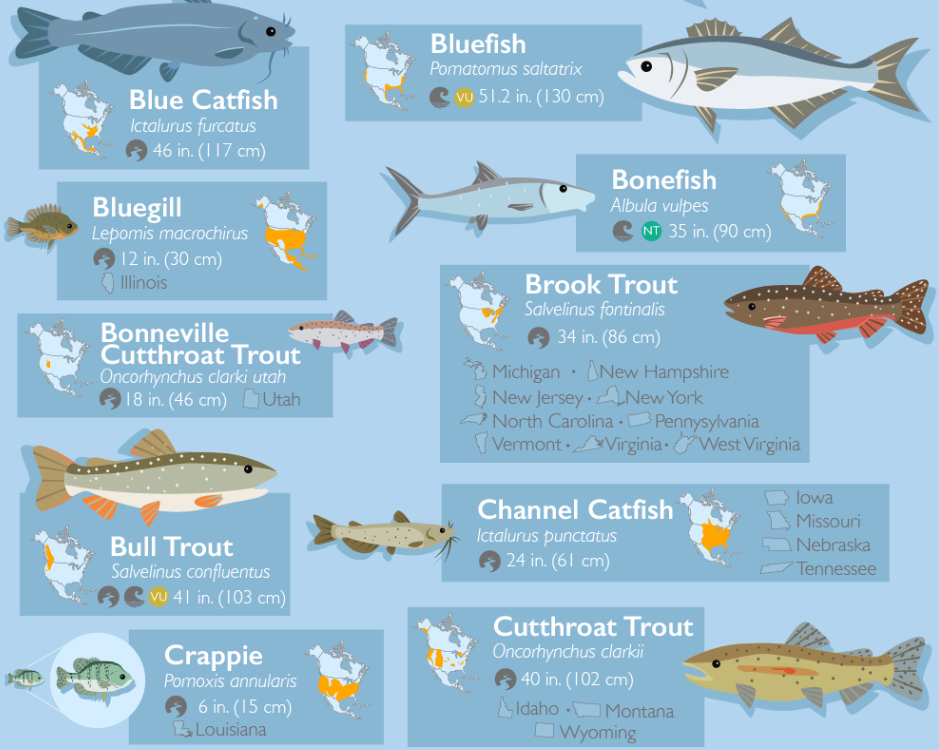 Poster of 50 Fish Species of North America A to Z of