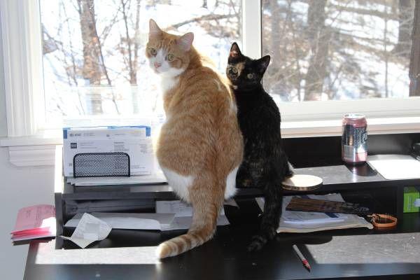 Lost Kitten Cat Reward Burlington Hide This Posting Image 2 Of