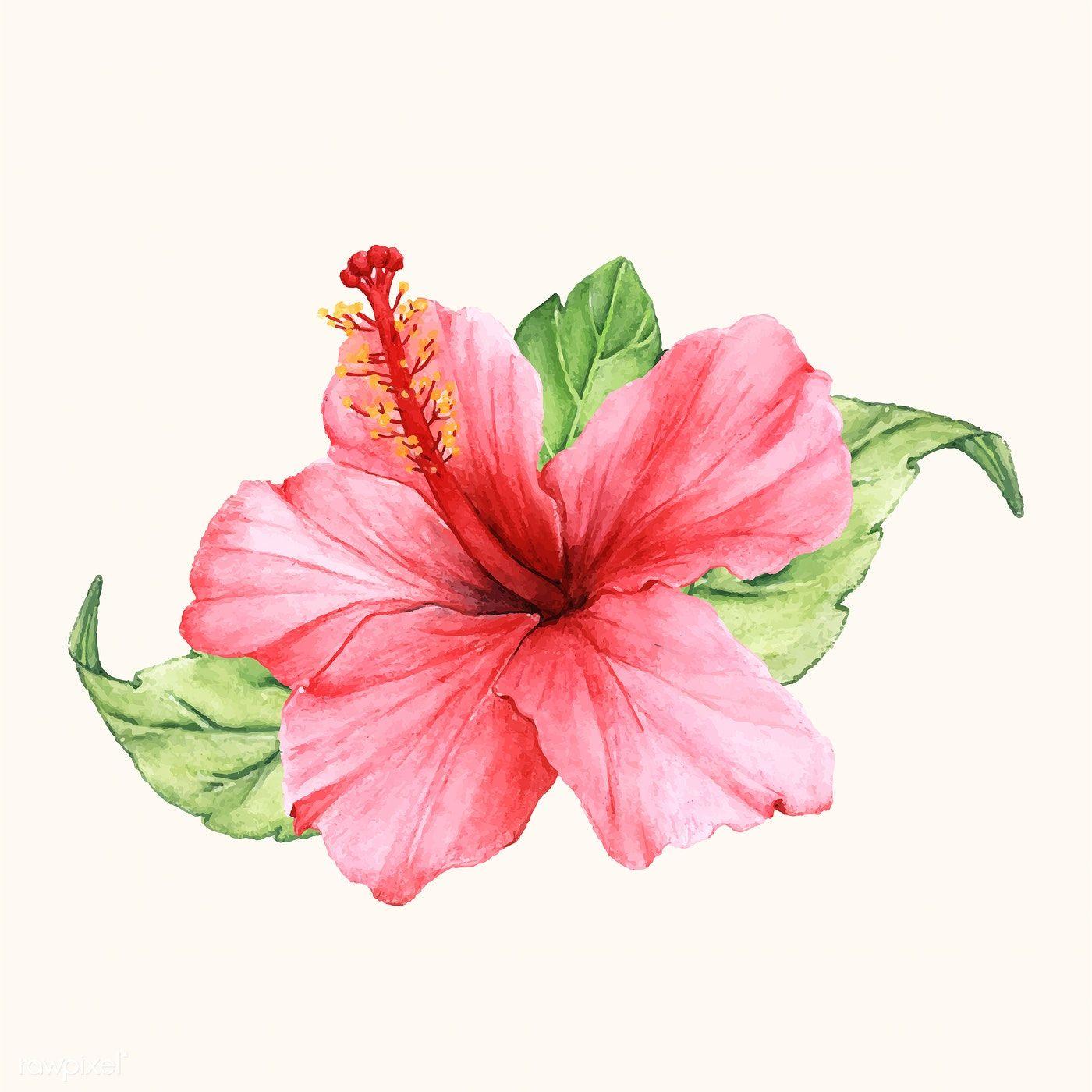 Download Premium Vector Of Hand Drawn Flower Vector Isolated 399615 Flower Drawing Hibiscus Flower Drawing Hibiscus Drawing