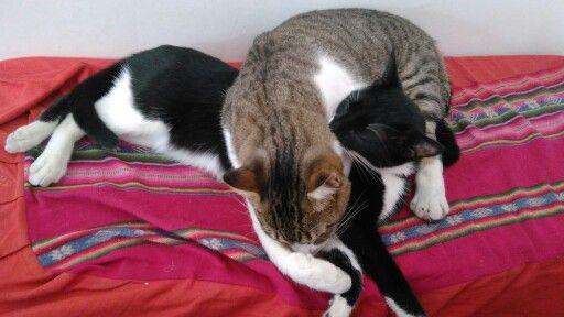 Dormimos la siesta abrazados?