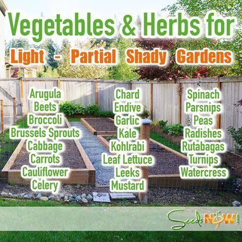 Https Www Seedsnow Com Blogs News Page 8 Growing 400 x 300