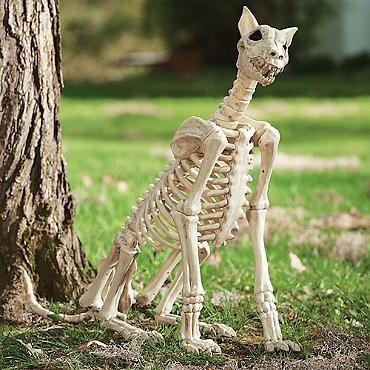 Spike the Skeleton Dog Halloween Decor Pinterest Halloween