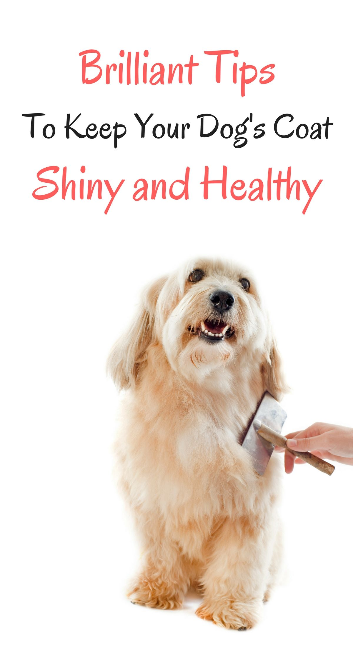 4 Brilliant Tips To Keep Your Dog S Coat Shiny And Healthy With
