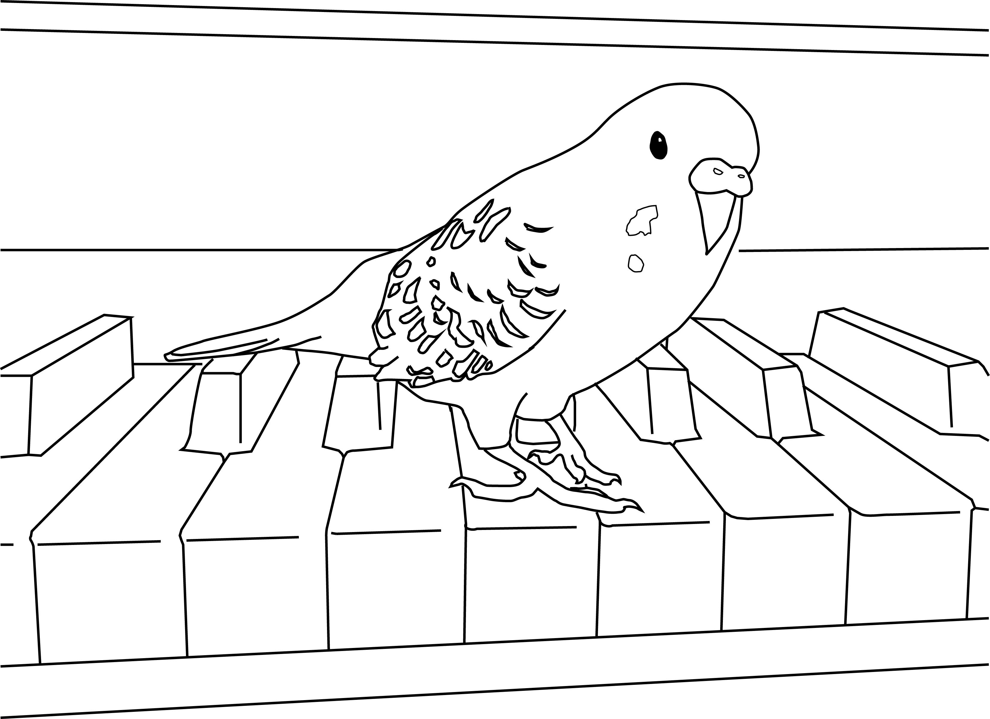Parakeet Coloring Pages | Parakeet | Pinterest | Parakeets and Budgies