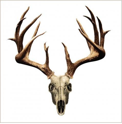 Window Decal For Jaremy S Truck Deer Skull Tattoos Deer Skull Drawing Deer Skulls