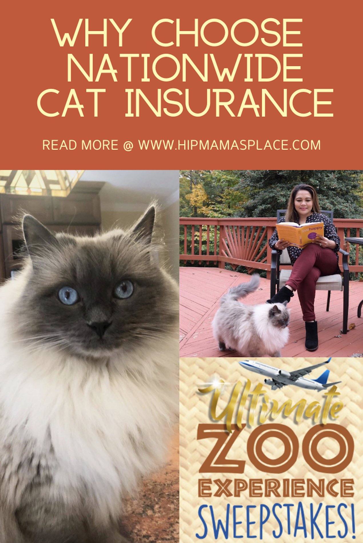 Get Your Free Quote For Cat Insurance With Nationwide Pet Cat Insurance Cat Parenting Cats
