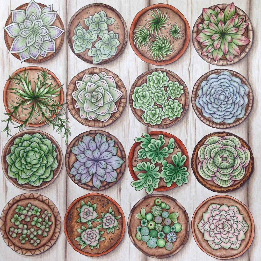 Succulents first page done in world of flowers