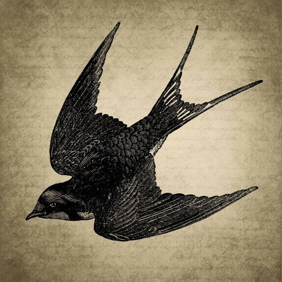 Vintage bird art, on Etsy.