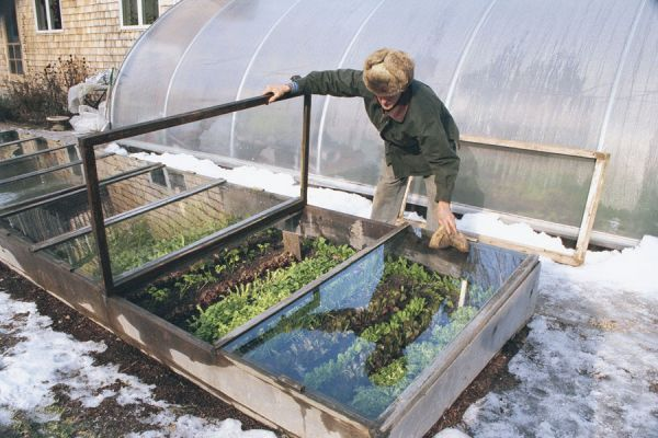 **A cold frame with a glass top can give you a 12-month growing season, even in Maine, and it's the easiest and most economical way to extend your harvest. Build the one described here, and you're on your way to fresh veggies year round.