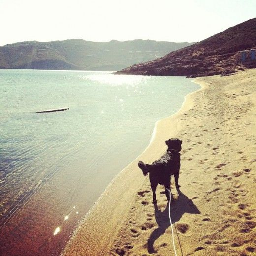 #LIFOPETS (6): Αυτά είναι τα κατοικίδιά μας | THE ANIMALS | Viral | LiFO