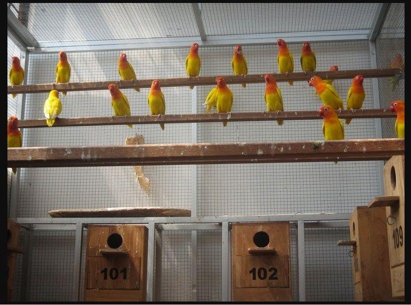 Gambar Umbaran Burung