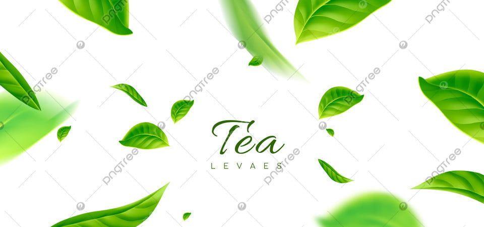 Fresh Green Green Tea Advertising Background Tea Leaves Illustration Green Leaf Tea Leaf Illustration