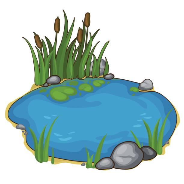 best pond illustrations royaltyfree vector graphics