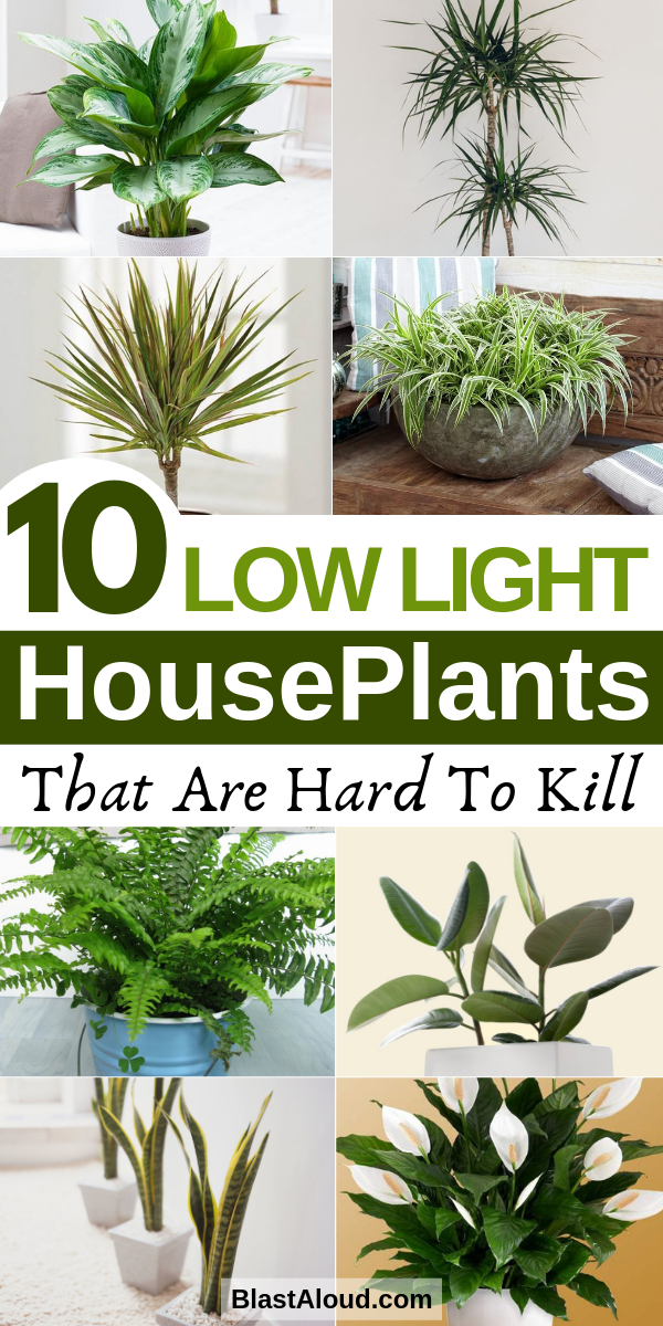 10 Low Light Houseplants That Are Low Maintenance And Hard To Kill These Low Light Indoor Plants In Houseplants Low Light Low Maintenance Indoor Plants Plants