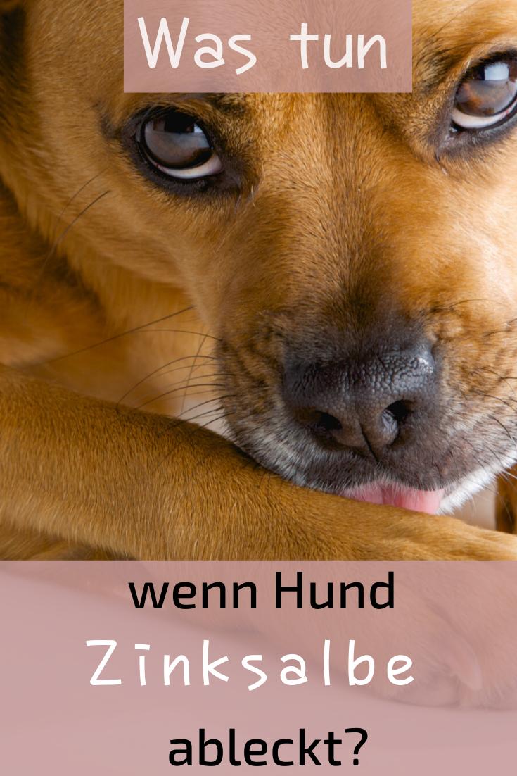 Zinksalbe Fur Hunde In 2020 Hausapotheke Lebertran Hundegesundheit