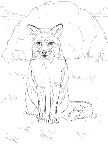 Sitting Red Fox Coloring page | colorbook | Pinterest | Zorro rojo ...