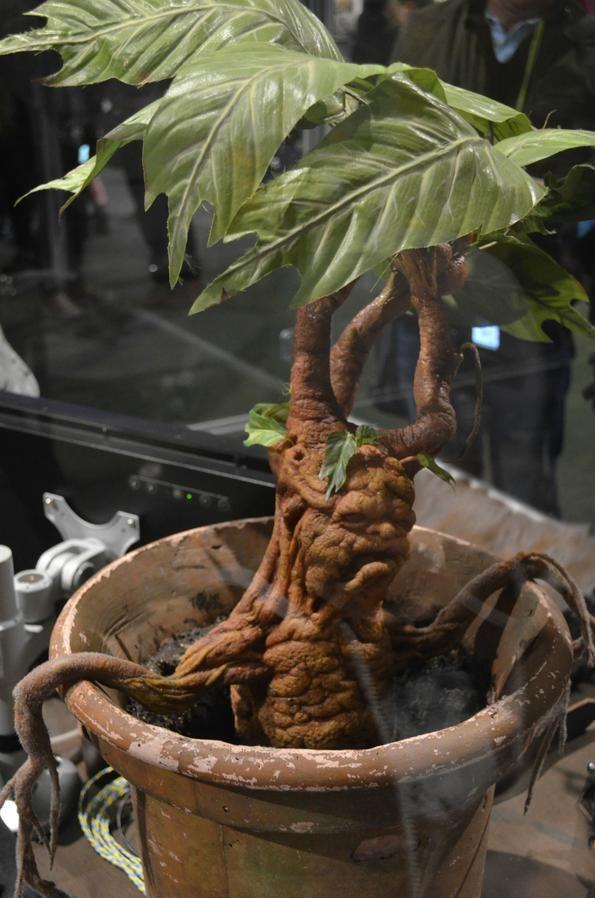 Mandrake Plant Harry Potter Jpg 595 898 Harry Potter Props Harry Potter Warner Bros Making Of Harry Potter