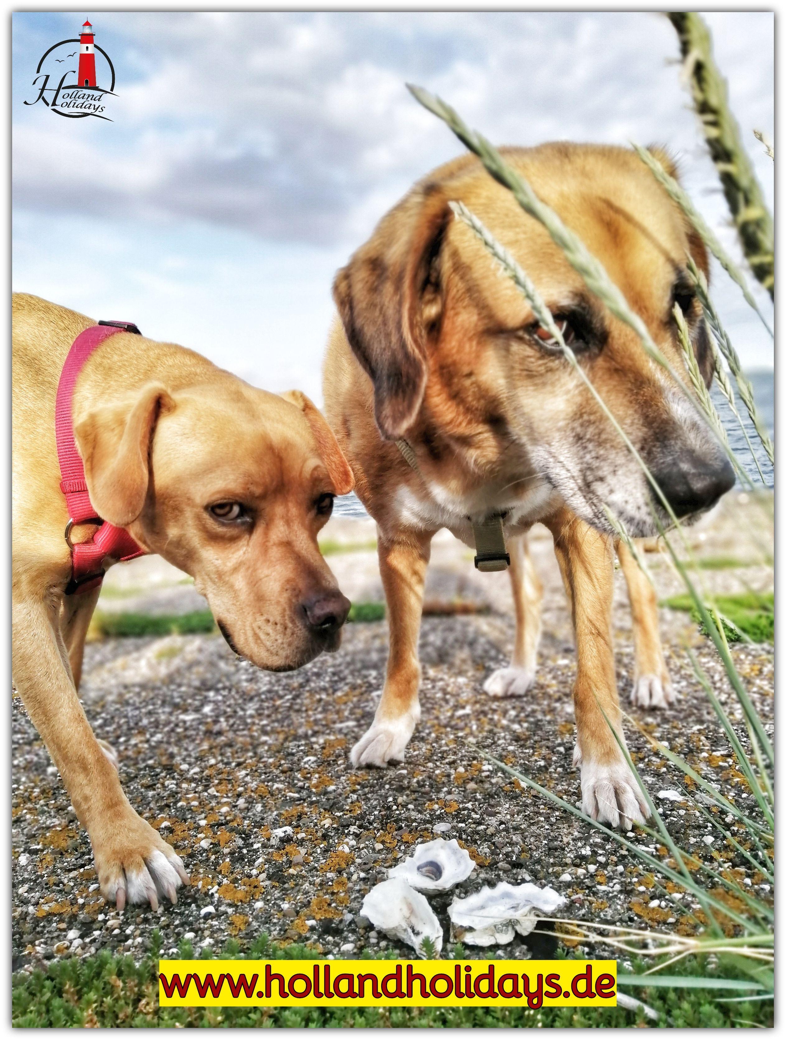 Wir Entdecken Zeeland In 2020 Hunde Und Kinder Urlaub Mit Hund Zeeland Niederlande