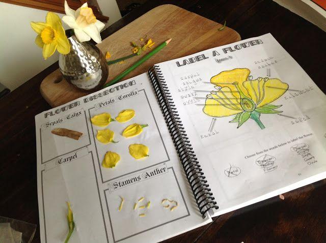 Quelle Est L Anatomie D Une Plante Decomposer Une Fleur Pour En