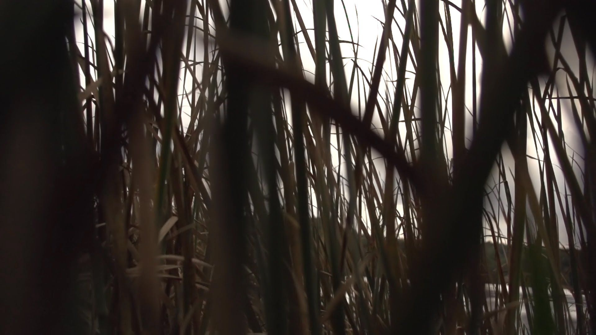Beachfront B Roll Through The Swamp Free To Use Hd Stock Video Footage Stock Video Ghost Stories Swamp