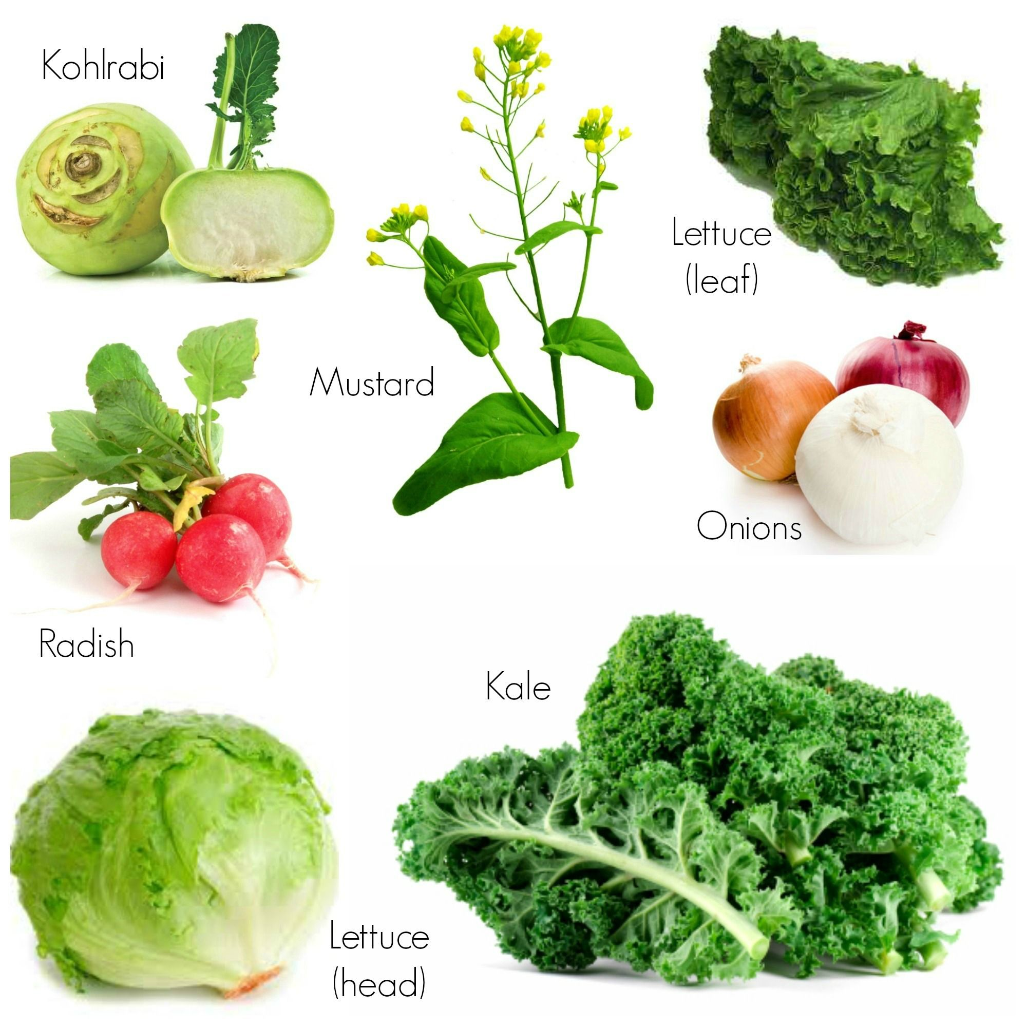 How To Grow And Use Fall Veggies