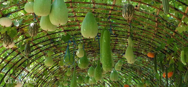 How Make A Beautiful Arch For Climbing Vegetables 400 x 300